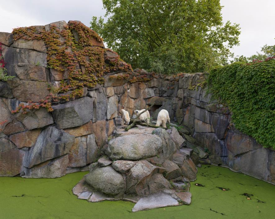หมีขั้วโลก, สวนสัตว์