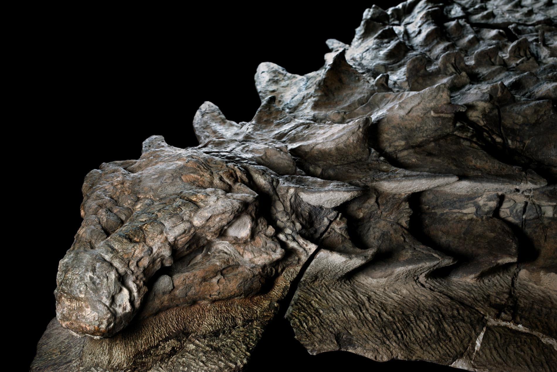 ฟอสซิลไดโนเสาร์