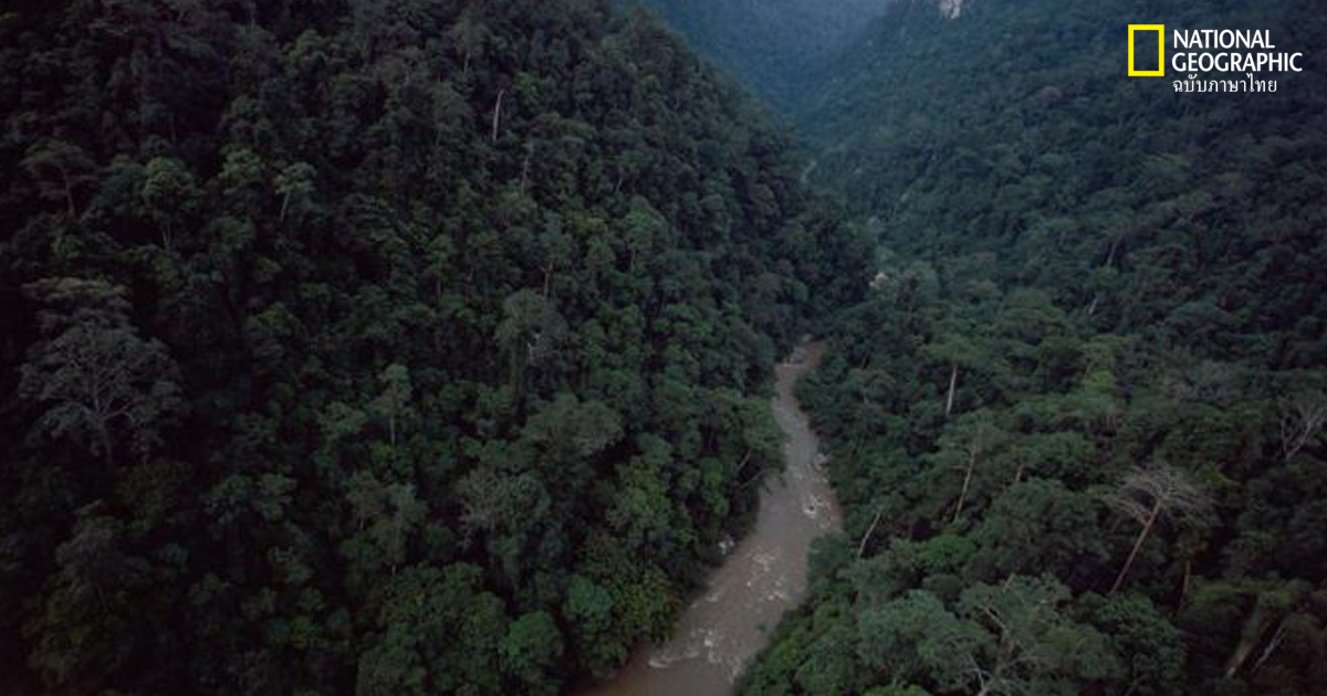 พิทักษ์ป่า