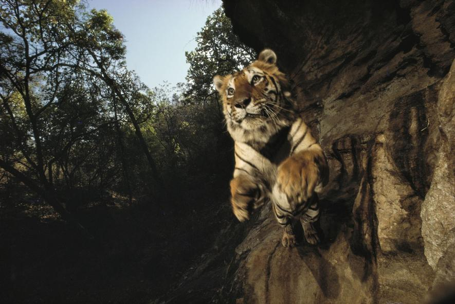 ภาพถ่ายสัตว์ป่า