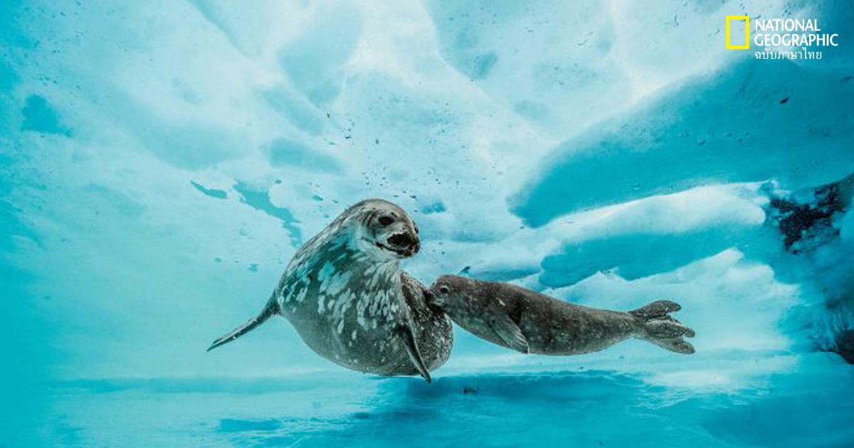 ทะเลแอนตาร์กติกา