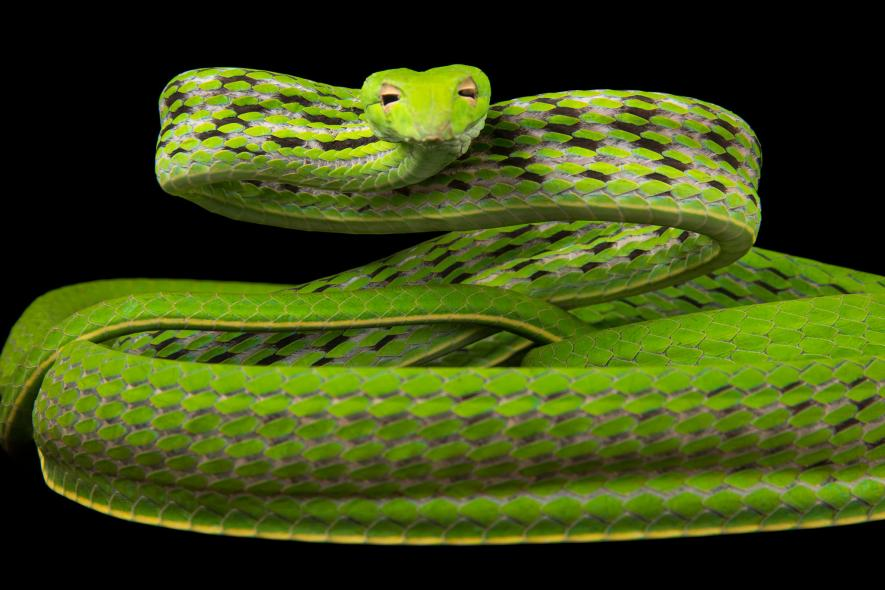 งูสวยๆ