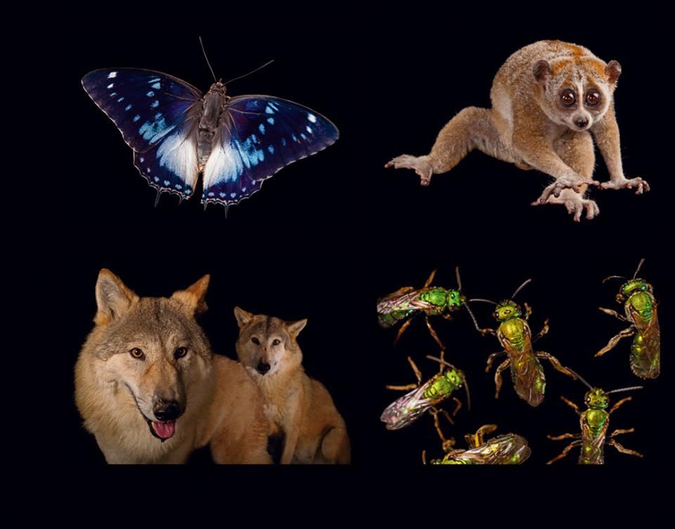 ภาพถ่ายสัตว์