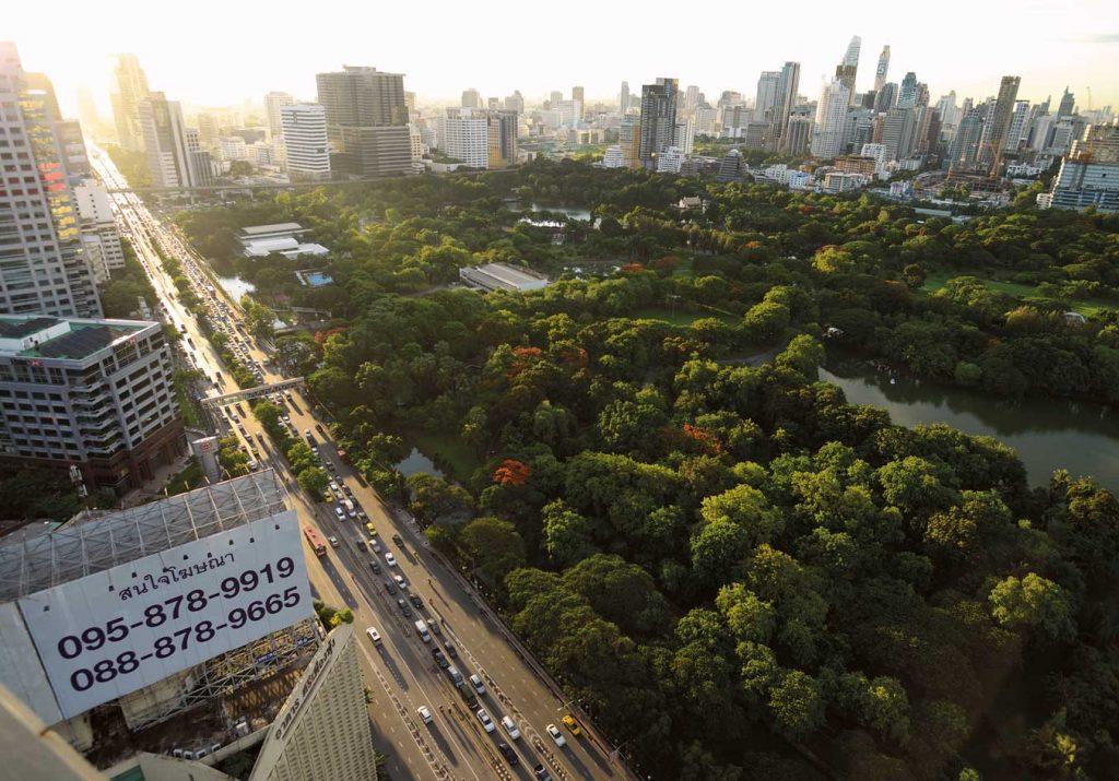 ต้นไม้ในเมือง