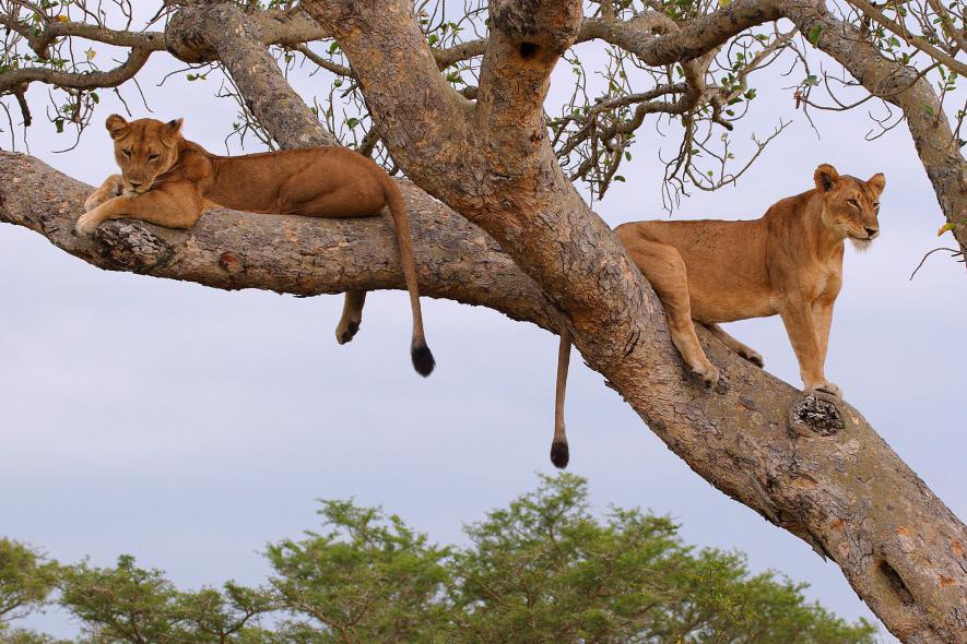 สิ่งมหัศจรรย์ทางธรรมชาติในแอฟริกา