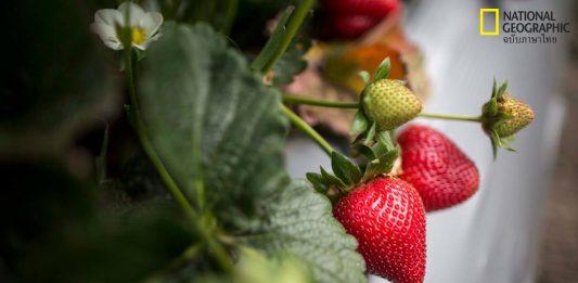 การยืดอายุผักผลไม้