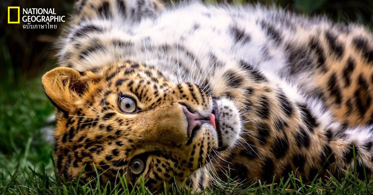 ภาพถ่ายสัตว์โลก