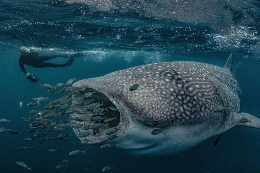 สิ่งมีชีวิตใต้ทะเล