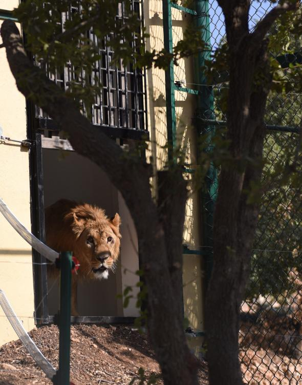 สวนสัตว์ซีเรีย