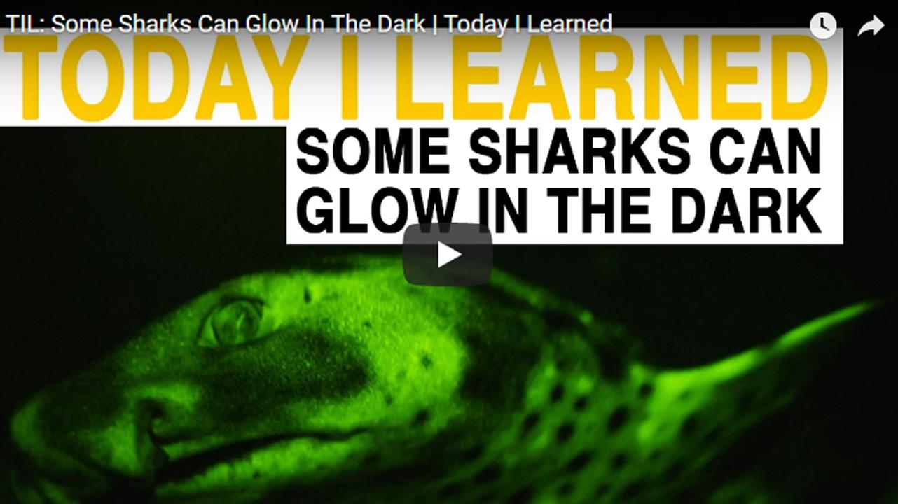 ฉลามเรืองแสง