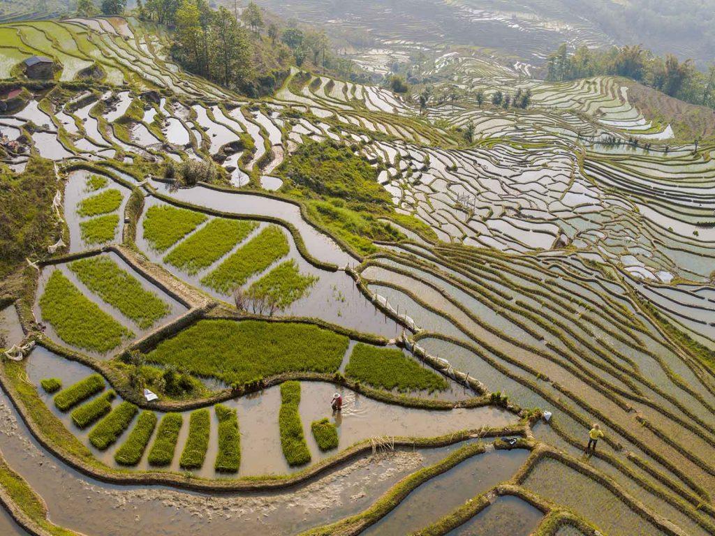 เกษตรจีน