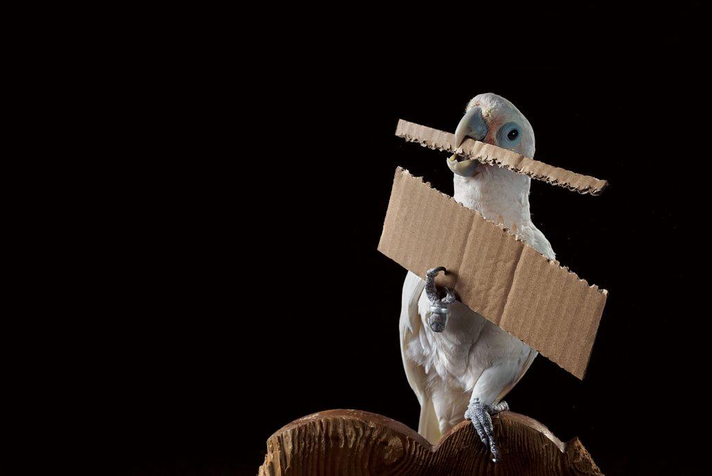 นกแสนรู้