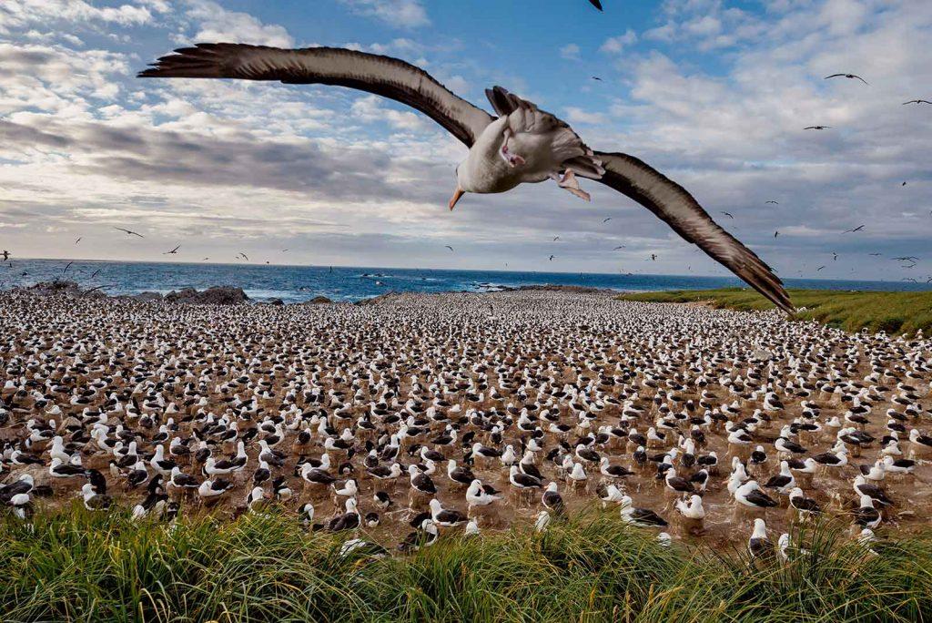 หมู่เกาะฟอล์กแลนด์