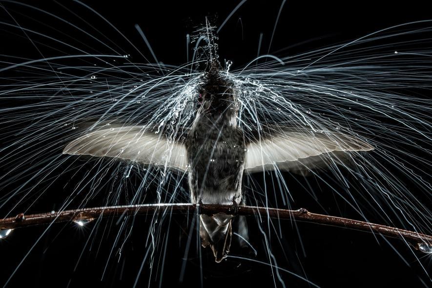 ภาพนกสวยๆ