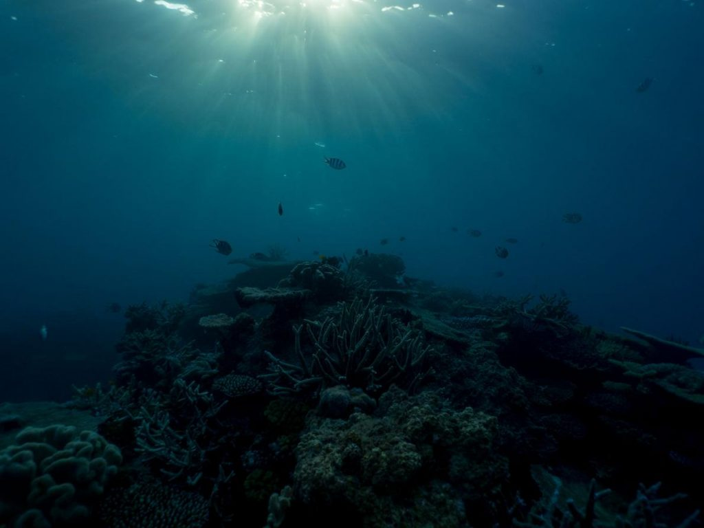 ปะการังผสมพันธุ์