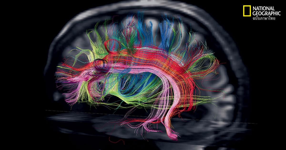 การทำงานของสมอง
