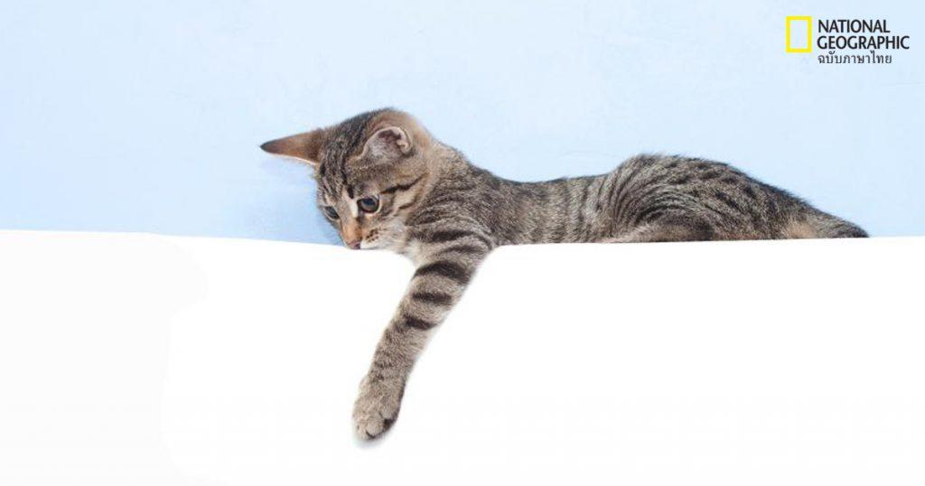 อุ้งตีน,แมว พฤติกรรมของแมว