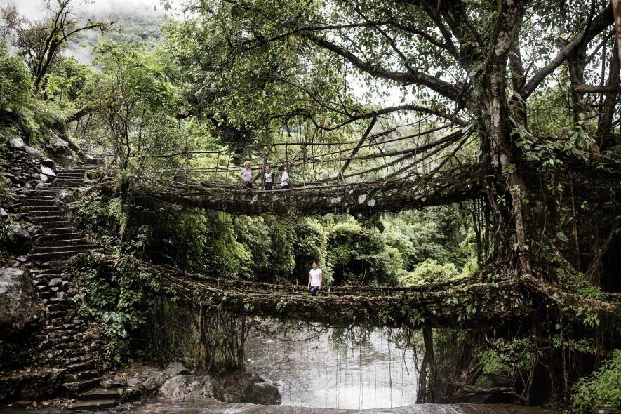 สะพานต้นไม้