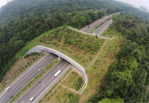 สะพานเชื่อมเพื่อสัตว์ป่า