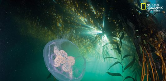 อัญมณีใต้ท้องทะเล