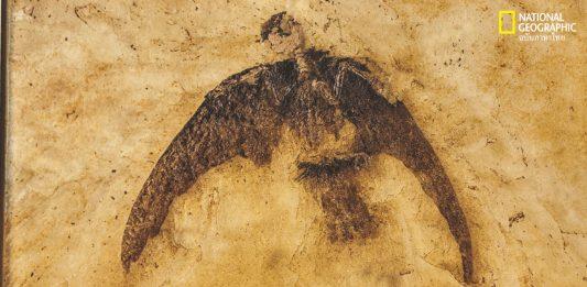 ไดโนเสาร์ที่ยังไม่สูญพันธุ์