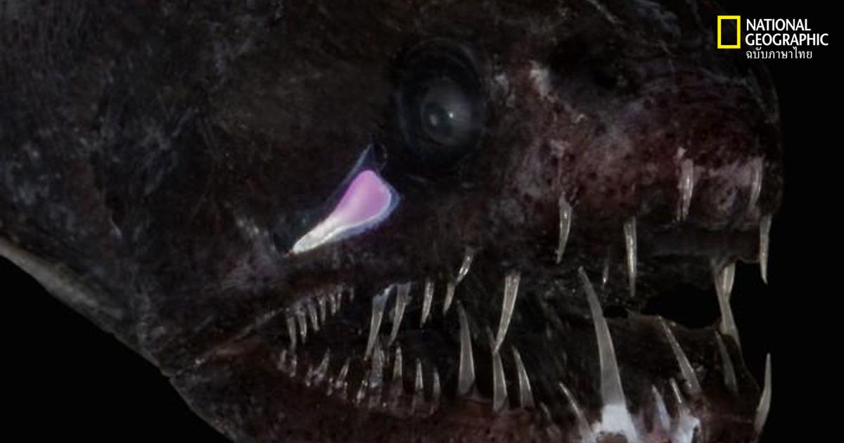 สัตว์น้ำใต้ทะเลลึก