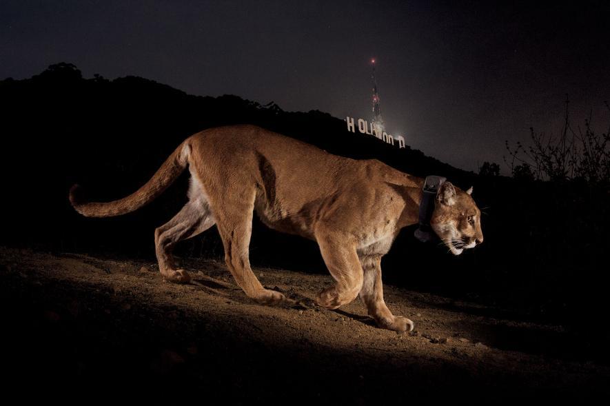 สัตว์กลางคืน