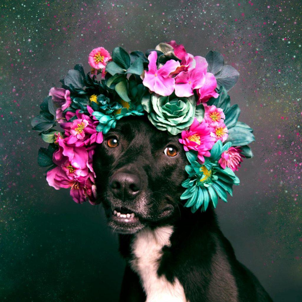 สุนัขพิทบูล