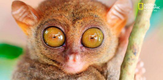 ดวงตาสัตว์