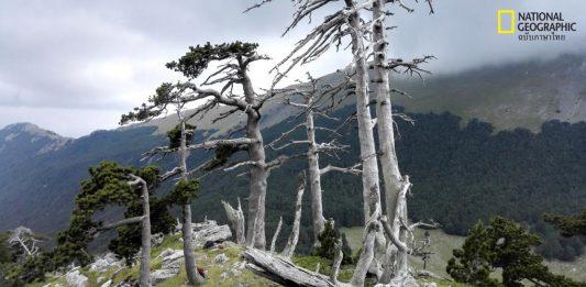 ต้นไม้ที่เก่าแก่ที่สุด