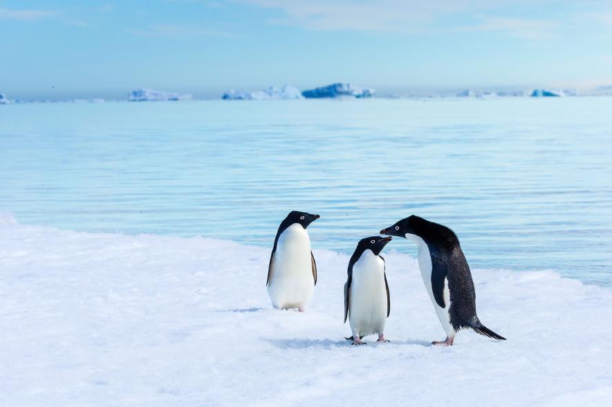 ทวีปแอนตาร์กติกา