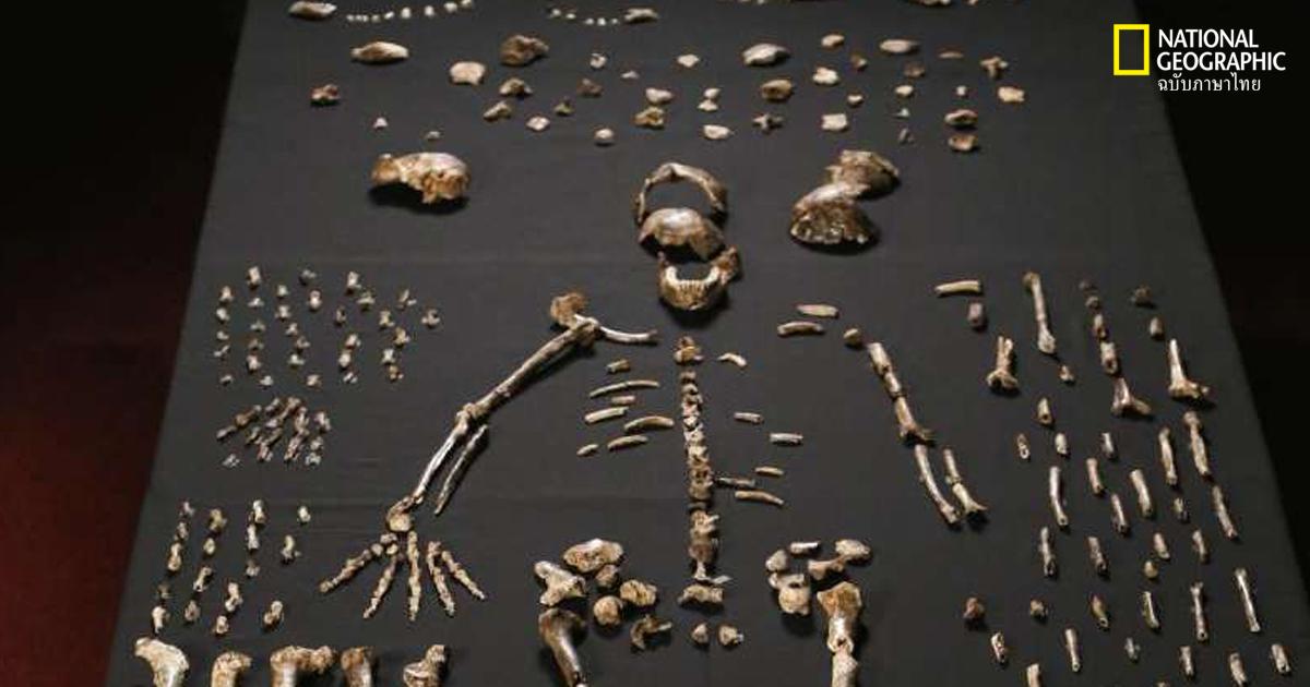 วิวัฒนาการกระดูกมนุษย์
