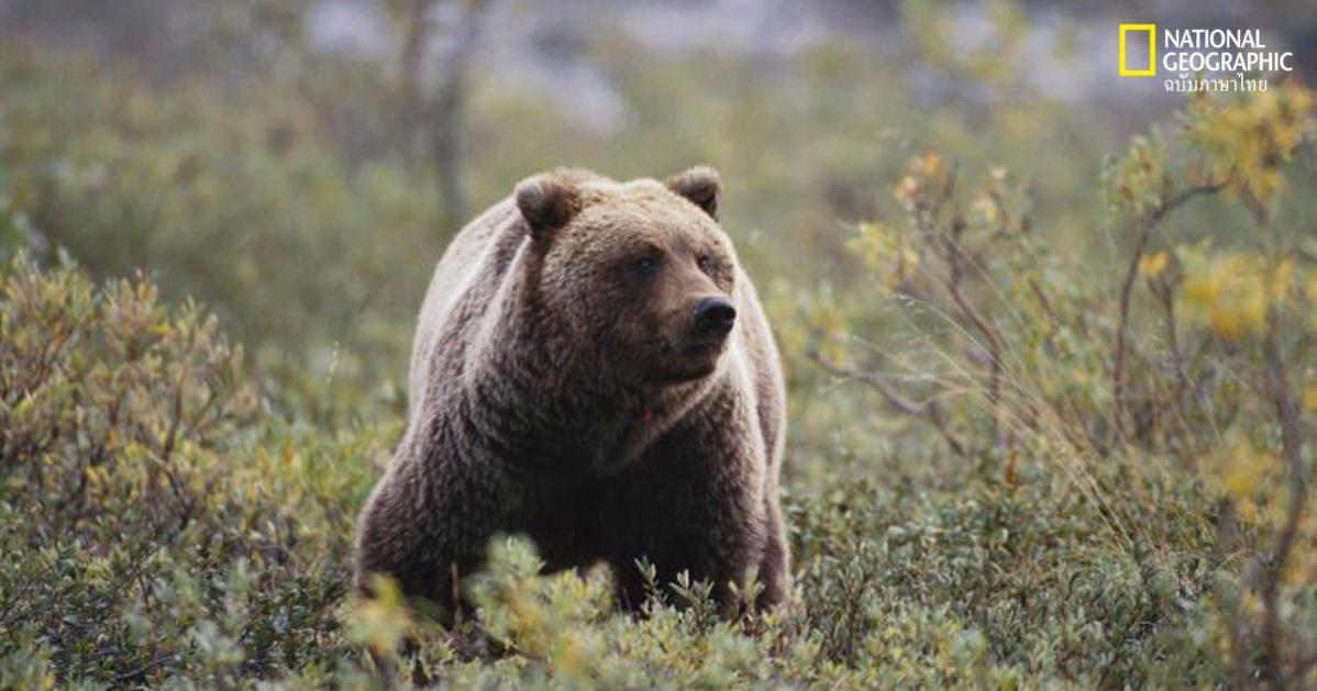 หมีถ้ำ