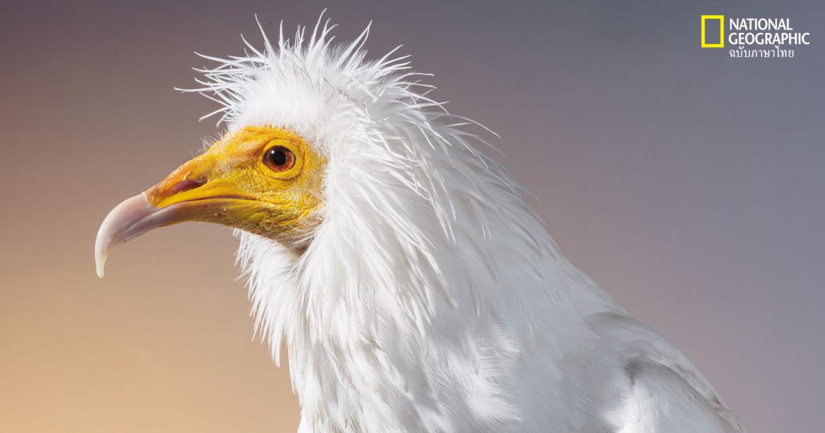 นกใกล้สูญพันธุ์