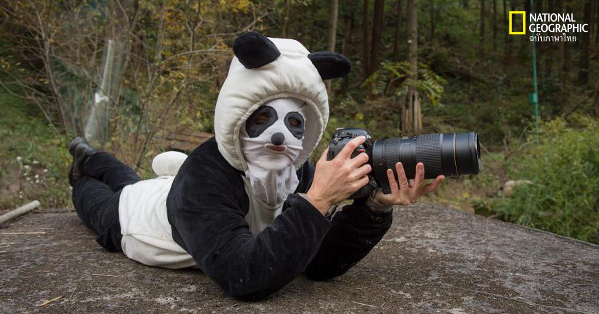 หมีแพนด้า