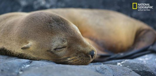 ภาพสัตว์นอนหลับ