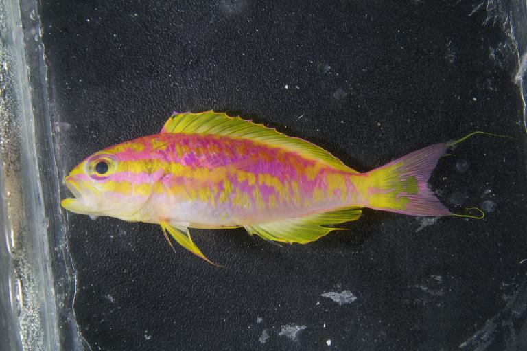 ปลาพันธุ์ใหม่