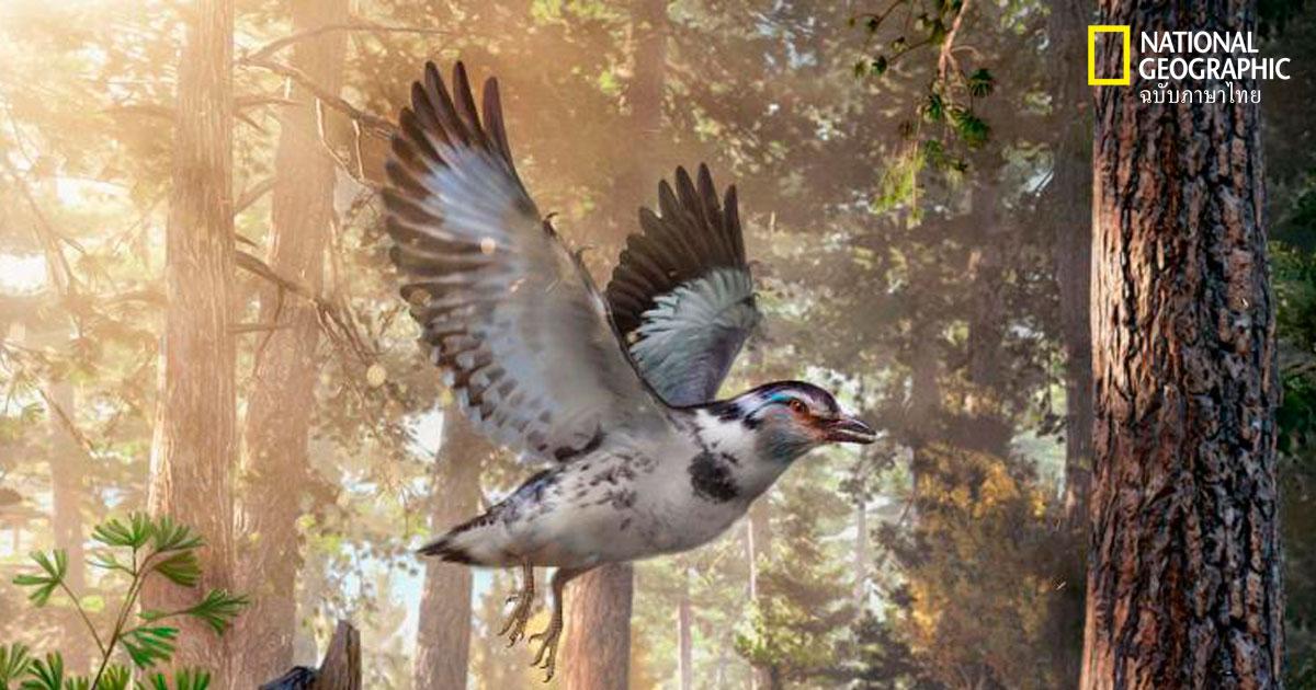 วิวัฒนาการการบิน