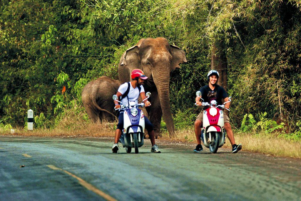 นักท่องเที่ยว, ป่าละอู, ช้างป่า,