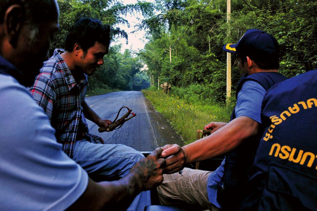 ชาวบ้าน, ช้างป่า, ไล่ช้าง, บนถนน
