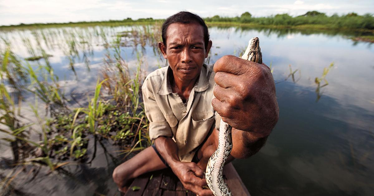 งูน้ำในโตนเลสาบ, การประมง, โตนเลสาบ, ทะเลสาบ, กัมพูชา