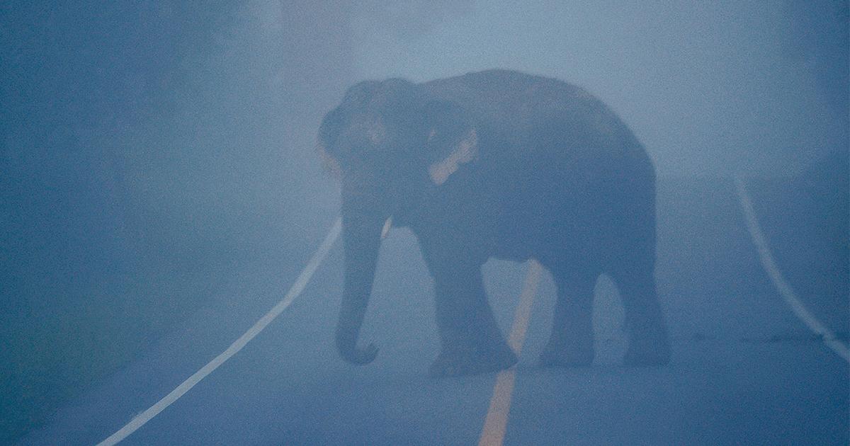 ช้างป่า, ป่าละอู, ถนนหลวง,