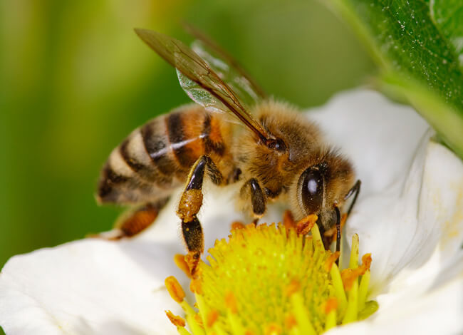 แมลงผสมเกสร, การสืบพันธุ์ของพืชดอก, การปฏิสนธิของพืชดอก, ดอกไม้