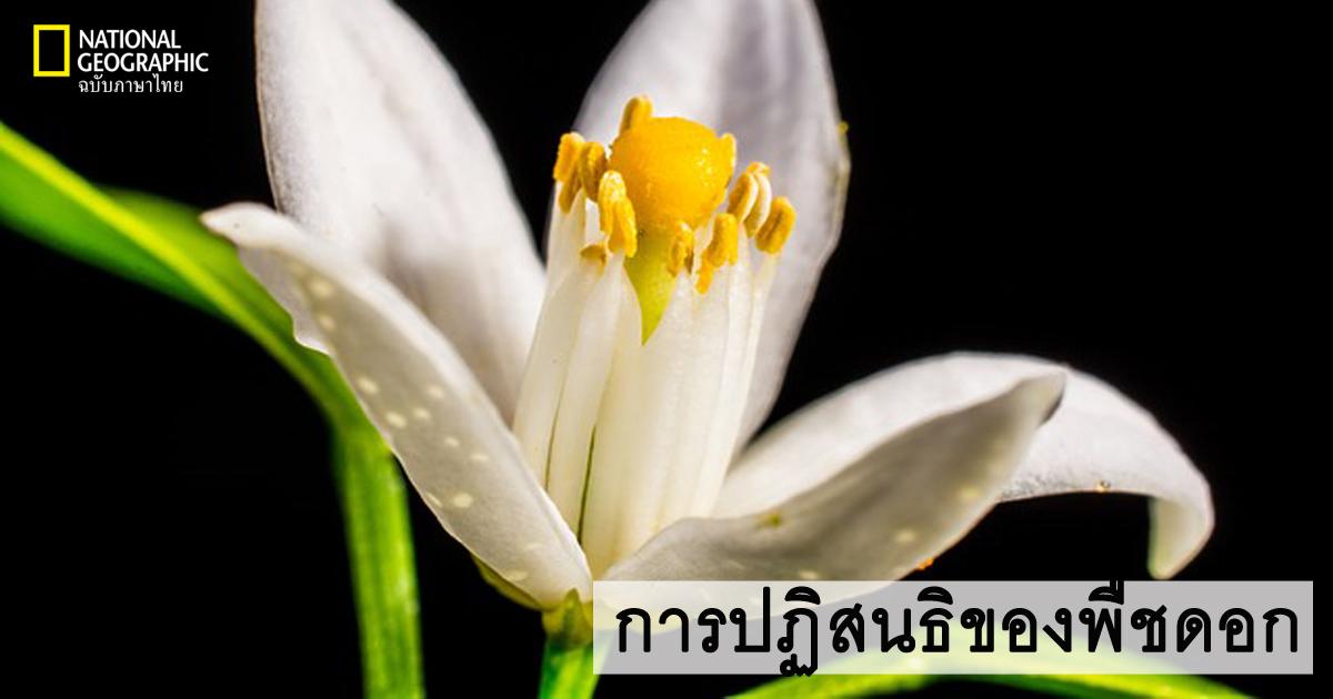 การถ่ายละอองเรณู, การปฏิสนธิของพืชดอก, การสืบพันธุ์ของพืช