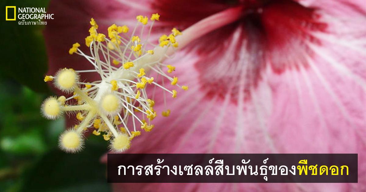 เซลล์สืบพันธุ์ของพืชดอก, การสืบพันธุ์ของพืชดอก,