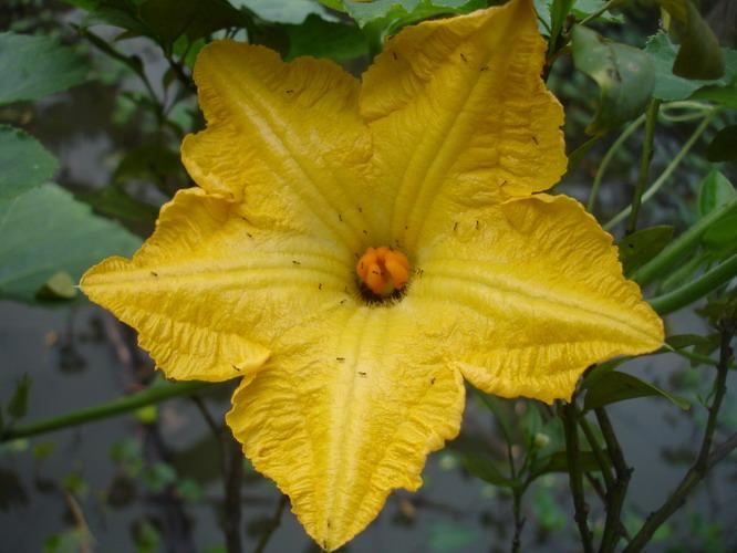 ดอกฟักทองตัวเมีย, ดอกไม่สมบูรณ์เพศ, ดอกไม่ครบส่วน, ชนิดของดอกไม้