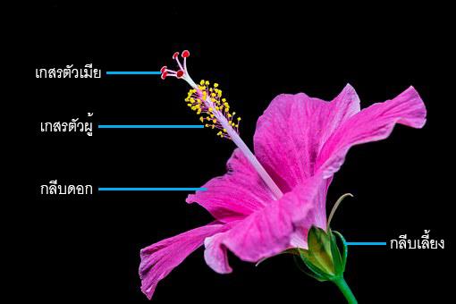 โครงสร้างของดอกไม้, พืชดอก, การสืบพันธุ์ของพืช