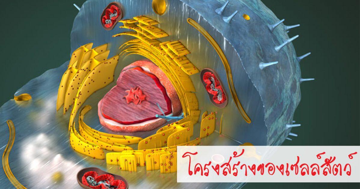 เซลล์สัตว์, เซลล์, ส่วนประกอบของเซลล์สัตว์, โครงสร้างของเซลล์
