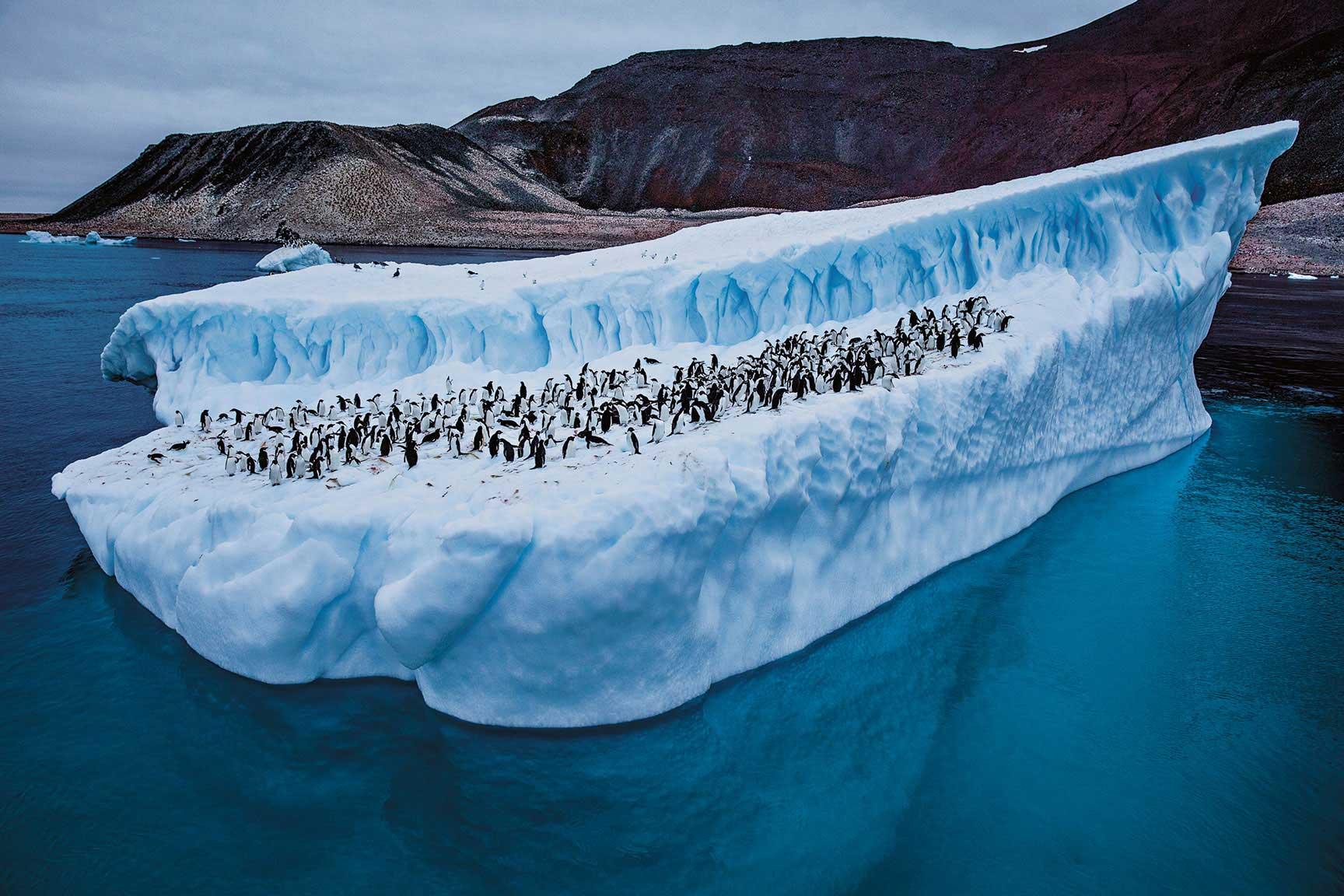 แอนตาร์กติกา