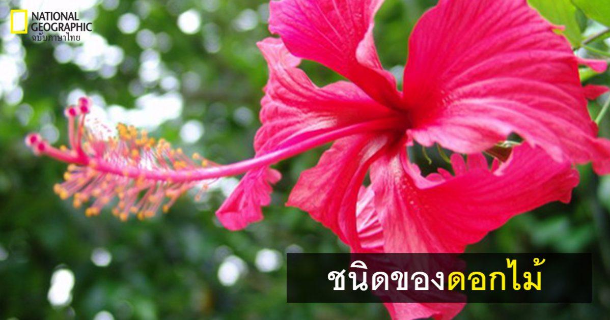 ชนิดของดอกไม้, ส่วนประกอบของดอกไม้, การสืบพันธุ์ของดอกไม้ การสืบพันธุ์ของพืชดอก